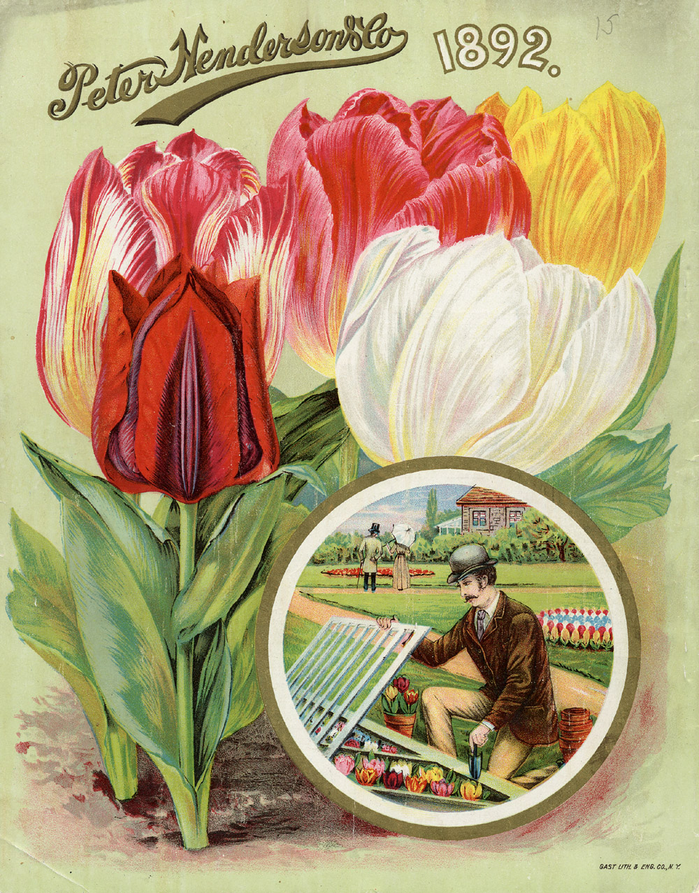 Henderson illustrated flwoers, but also the lawn in this catalog cover.