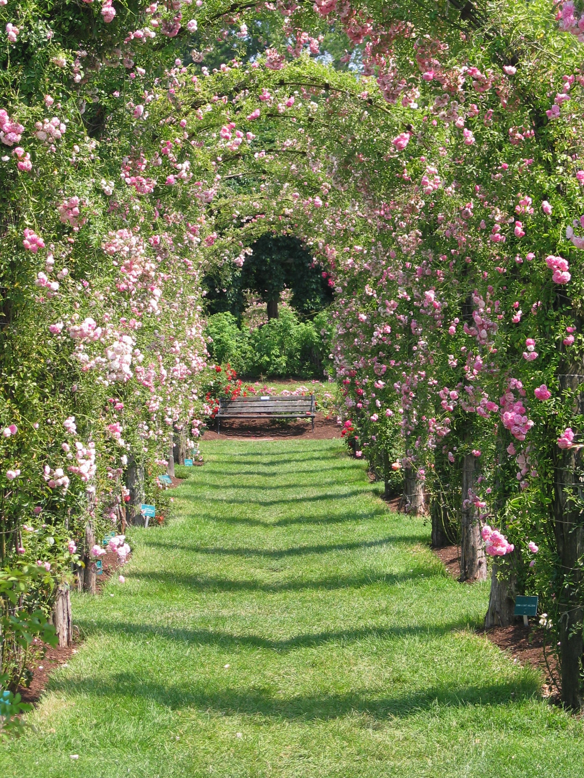 You can grow as well as eat a rose american gardening for The gardens of the american rose center