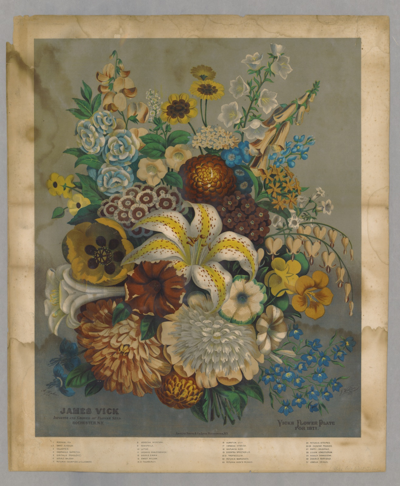 A chromo from the James Vick Seed Company. [Courtesy of AAS]